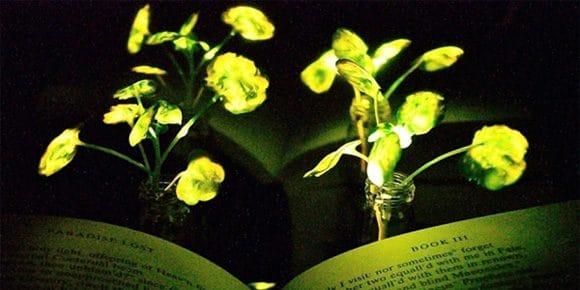 lichtgevende planten