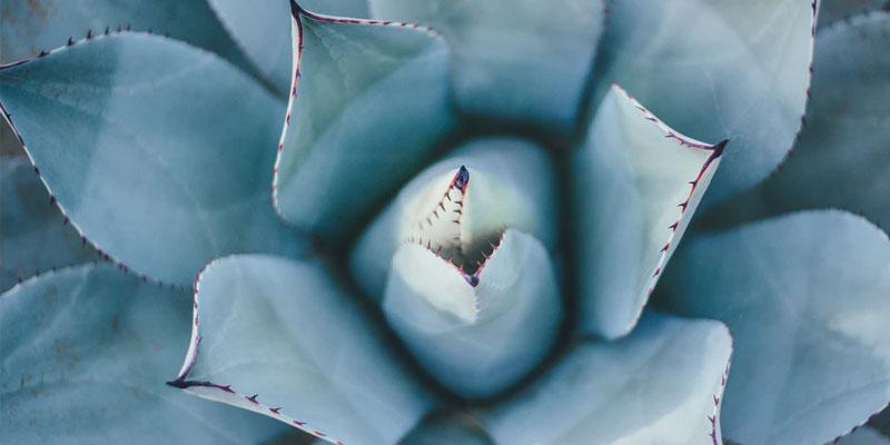 Bloemen en planten als relatiegeschenk