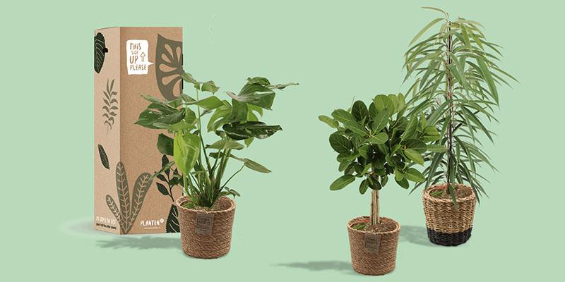 Plantenbox: plant per post