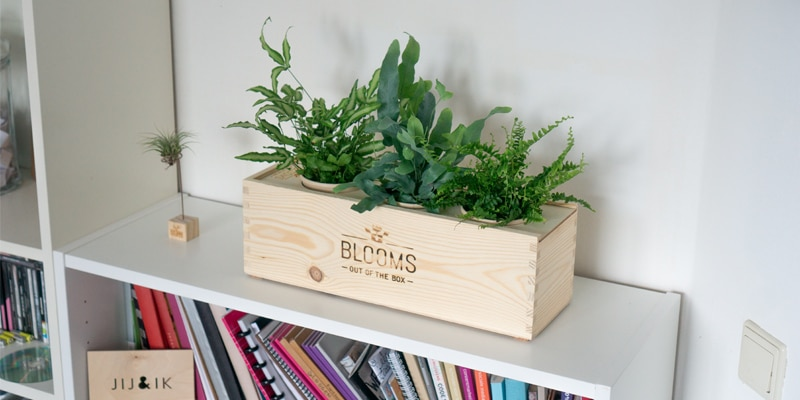 Blooms out of the Box: plantjes uit een doosje